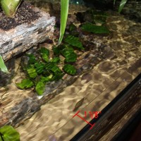 1 1/8 Rimless Aquarium Lip Lid Cut To Size